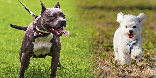 Hunde und Halter bei Streit verletzt