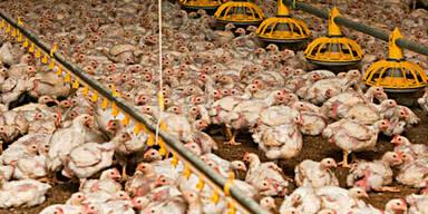 Betrug mit Bio-Eiern: Bäuerin angeklagt