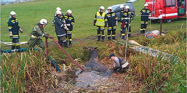Pferd steckte in Teich fest - gerettet