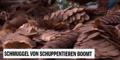 Unsere Tiere - Schuppentiere, Schmuggel 2 - Sendung 26072020