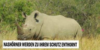 Unsere Tiere - Tierschutz-CH - Nashorn Jagd 1 - Sendung 14062020