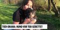 Hund von Pfotenhilfe vor Tod gerettet