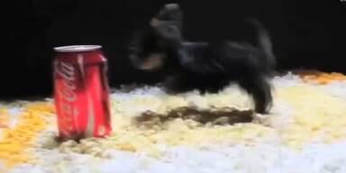 Kleinster Hund der Welt misst nur 7 cm