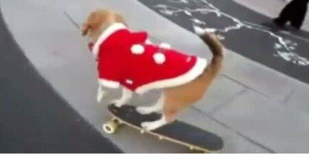 So süß! Hund skatet im Weihnachtskostüm