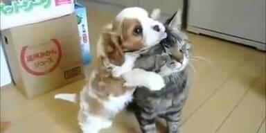 Katze vs. Hund: Was sich liebt, neckt sich
