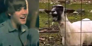 Youtube-Hit: Stars im Duett mit Ziegen