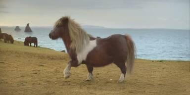 Youtube-Hit: Pony tanzt den 'Moonwalk'