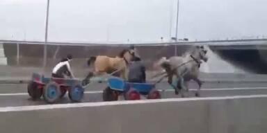Illegal: Pferderennen auf rumänischer Autobahn