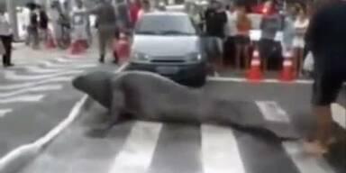 See-Elefant stellt ganze Stadt auf den Kopf