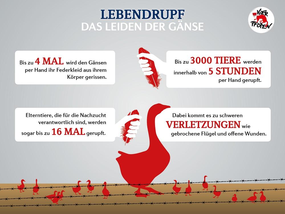 Vier Pfoten - Unsere Tiere - Sendung 03112019 - Ganslessen-Grafik