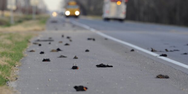 500 weitere Vögel tot vom Himmel gefallen