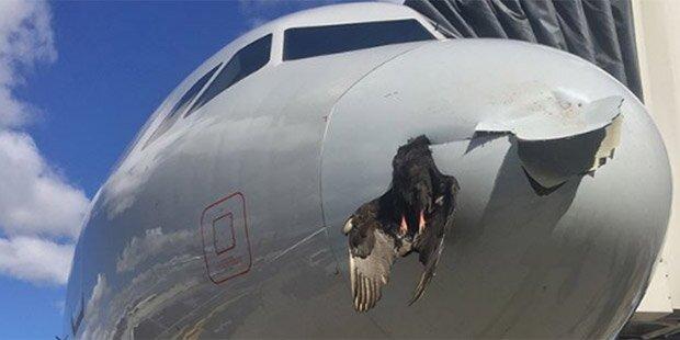 Vogel donnert gegen Flieger und bleibt stecken