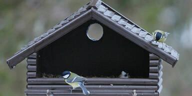 Vogelfutter Vogelhaus Vogel
