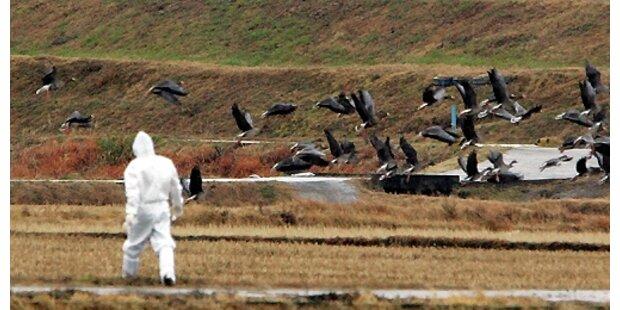 Vogelgrippe in Ungarn bestätigt