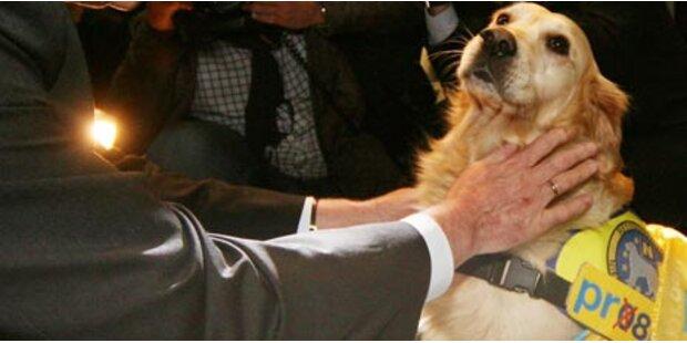 NÖ-Hundehalsband für First Dog Toby
