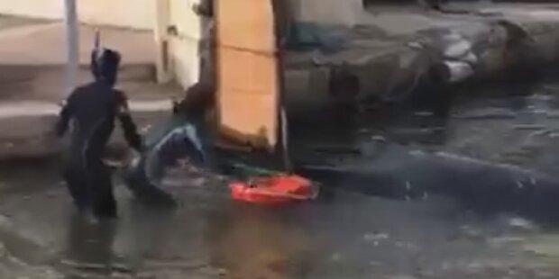 Wal verirrte sich in alten Hafen von Marseille