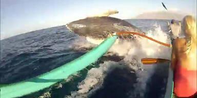 Buckelwal bringt Kanu fast zum Kentern