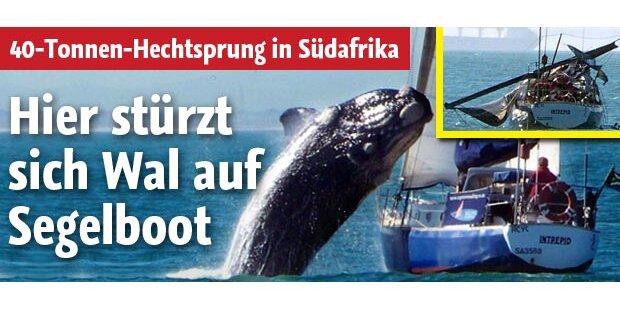 Wal stürzt sich auf Segelboot