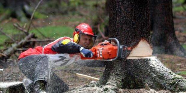 Sohn fällte Tanne: Baum traf Eltern tödlich