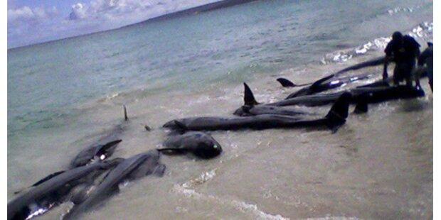 Über 80 Wale in Australien gestrandet