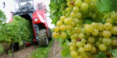 Weinherbst startet in Weißenkirchen