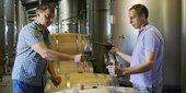 Weinproduktion geht deutlich zurück