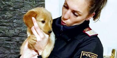 Brutale Hundewelpen-Quäler müssen sich verantworten
