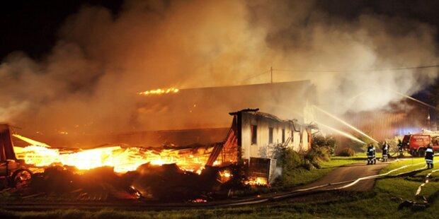 300 Schweine auf Bauernhof verbrannt