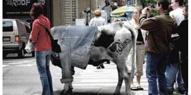 Wenn Kühe Jacken tragen