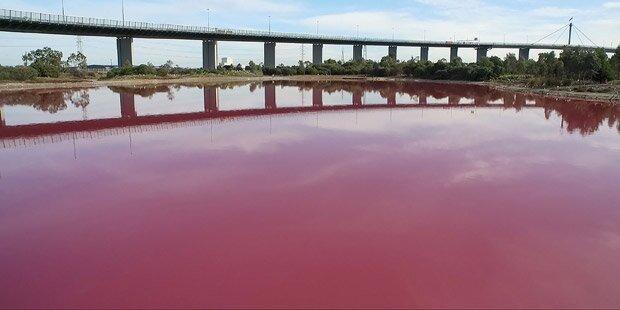 Darum färbt sich dieser See im Sommer pink
