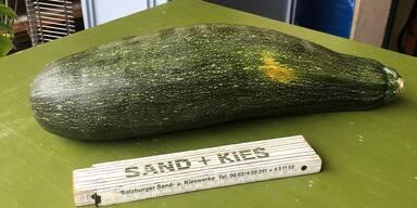 Aus Riesen-Kürbis wurde Riesen-Zucchini