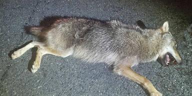 Pkw kollidiert auf der A13 mit einem Wolf