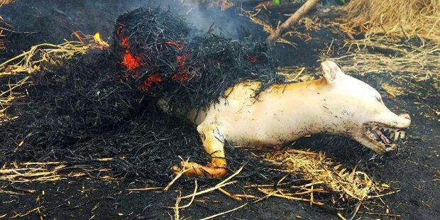 Hundefleischfestival sorgt für Aufregung