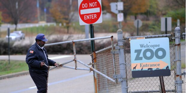 Bub in US-Zoo von Wildhunden zerfleischt