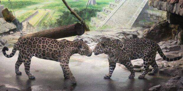 Jaguar bekommt Gesellschaft
