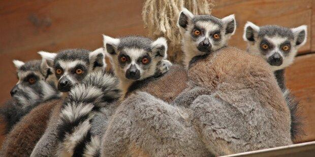 Nachwuchs im Zoo Salzburg