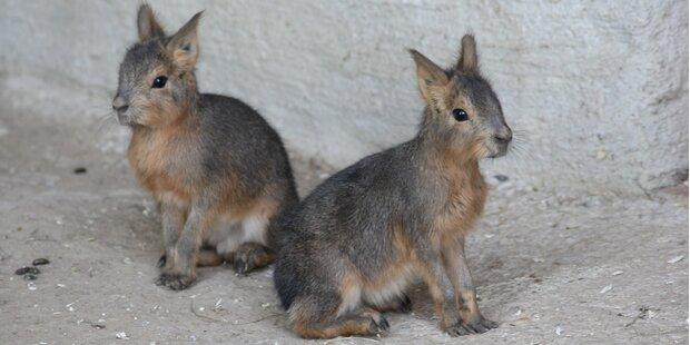 Tiere in Hellbrunn stellen sich auf Winter ein