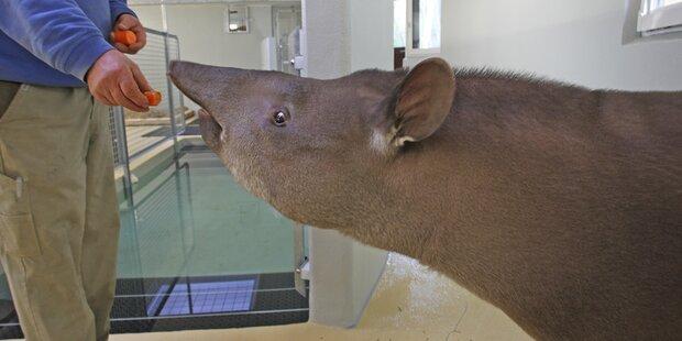 Neue Tierart im Zoo Salzburg