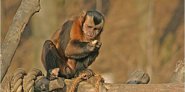 Christbäume für die Zootiere