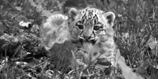Traurige Nachricht aus dem Zoo Salzburg