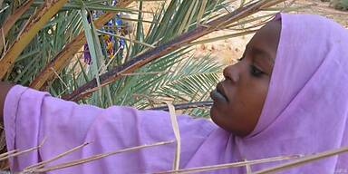 Zur Dattelernte 1.500 Kilometer durch die Sahara