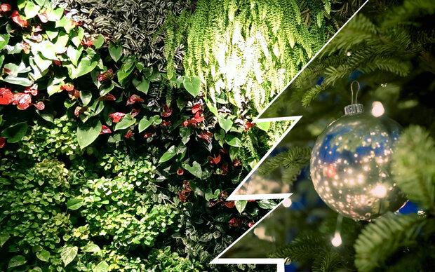 Gartenwand: So lieben wir grüne Weihnachten
