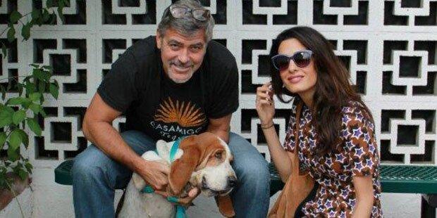 Familienzuwachs für die Clooneys