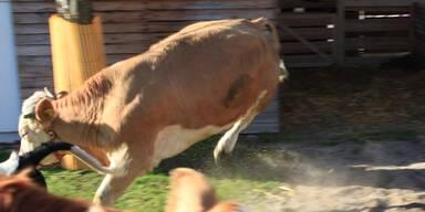 """Kopie von Eine überglückliche """"Kuh Yvonne"""""""