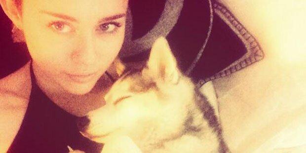 Miley Cyrus holt ein Hundemedium
