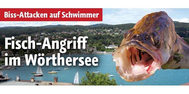 Fisch-Angriff im Wörthersee