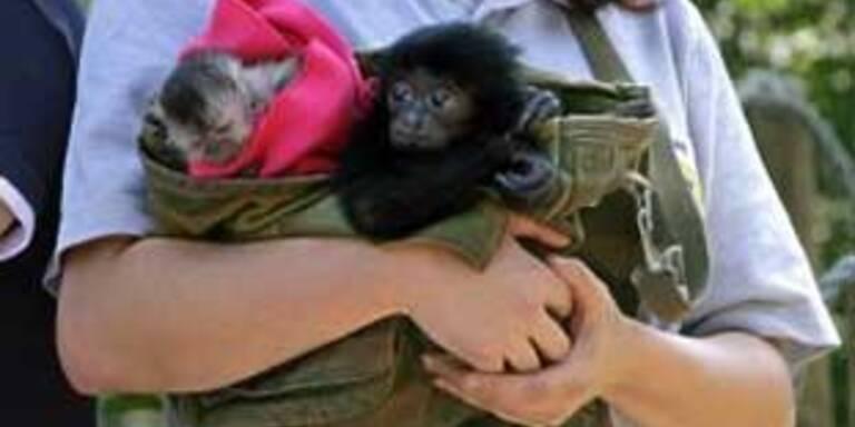 """Sieben Monate Prozess um """"Sorgerecht"""" für Affen"""