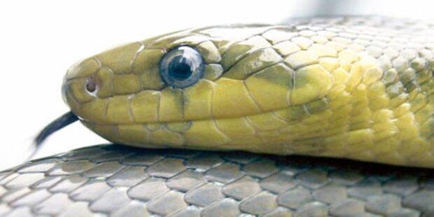 Hausfrau hatte 3 (!) Schlangen im Auto