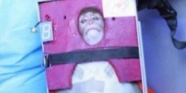 Iran schickt Affen ins Weltall