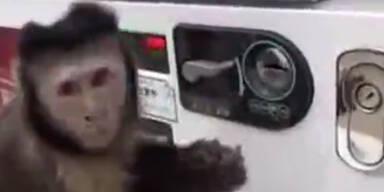 Dieser kleine Affe kauft sich einen Drink